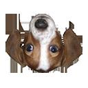 FrankerFaceZ Chrome extension download